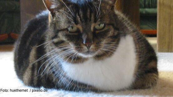 7 Ursachen Fur Erbrechen Der Katze 6 Tipps Zur Vorsorge