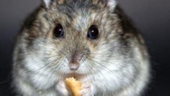 Diabetes mellitus bei der Katze - MSD Tiergesundheit Deutschland